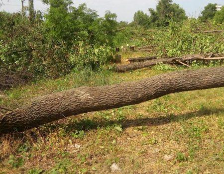 І знову «дерева самі винні»… ФОТО