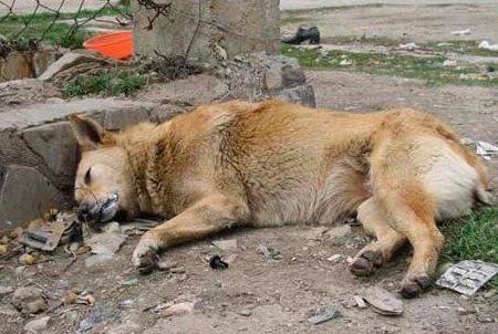 Міську владу закликали покласти край отруєнню тварин у Кропивницькому