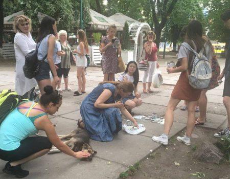 За два кроки від міськради Кропивницького потруїли собак – тварини корчилися в судомах на очах у дітей. ФОТО