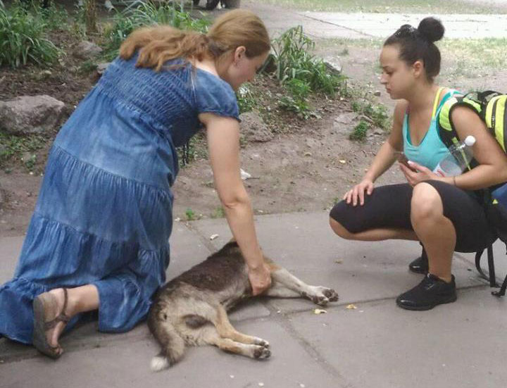 """Фото зі сторінки ГО """"Щасливий пес"""" у Фейсбуці"""