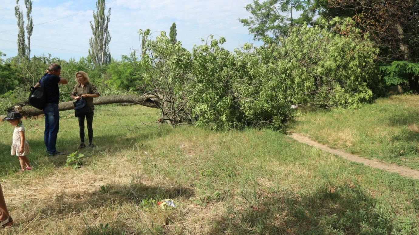 Без Купюр У Кропивницькому відбулася акція проти вирубки приватним підприємством 40 дерев для будівництва магазину Події  Родина Онулів озеленення Кропивницький вирубка дерев