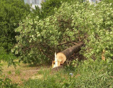 """У Кропивницькому приватне підприємство """"під шумок"""" спиляло значно більше дерев, ніж було дозволено. ФОТО"""