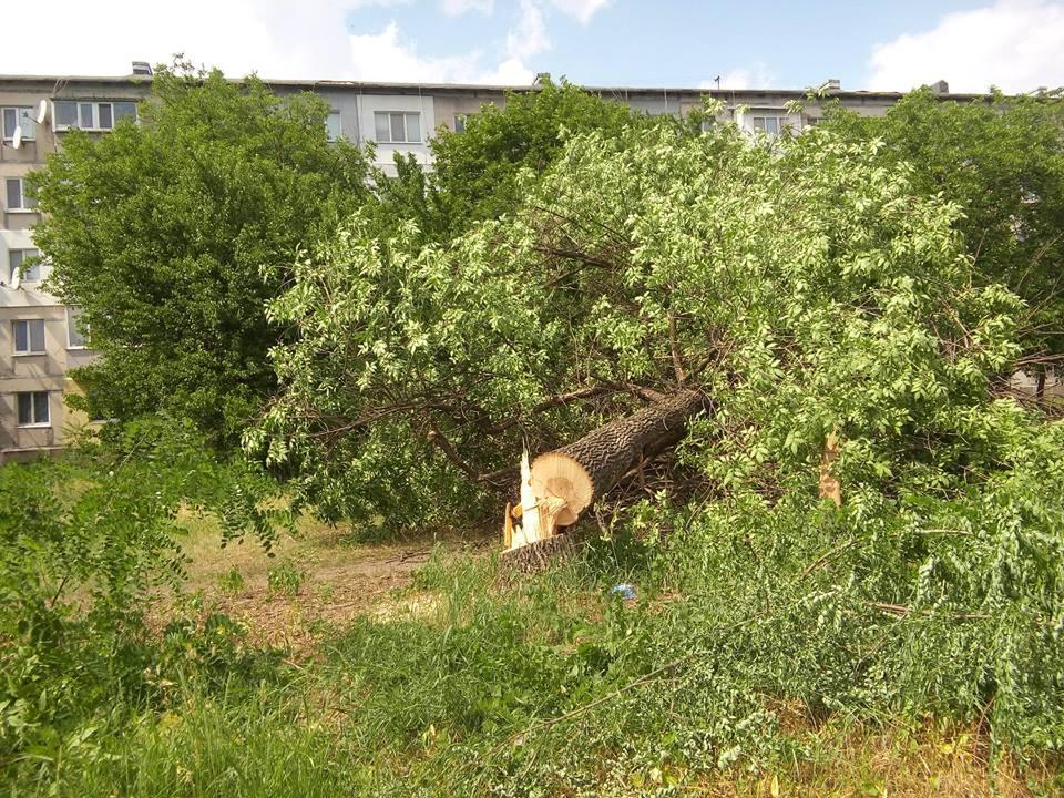 """У Кропивницькому приватне підприємство """"під шумок"""" спиляло значно більше дерев, ніж було дозволено. ФОТО - 1 - Події - Без Купюр"""