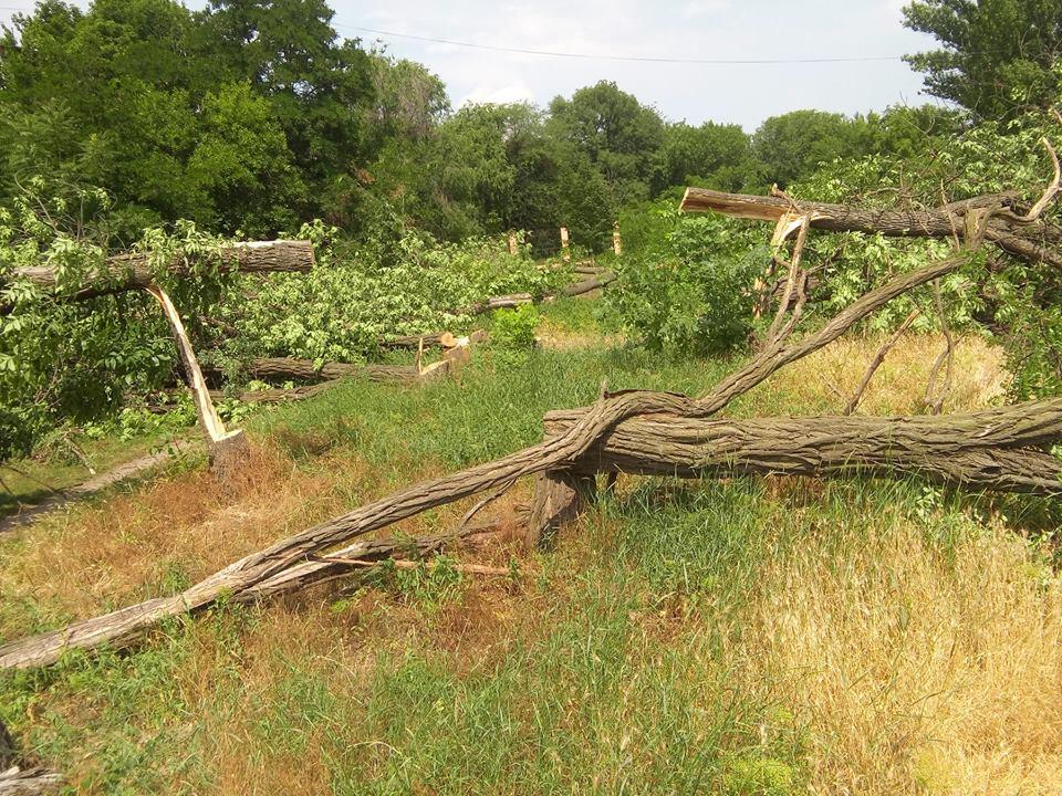 """У Кропивницькому приватне підприємство """"під шумок"""" спиляло значно більше дерев, ніж було дозволено. ФОТО - 2 - Події - Без Купюр"""