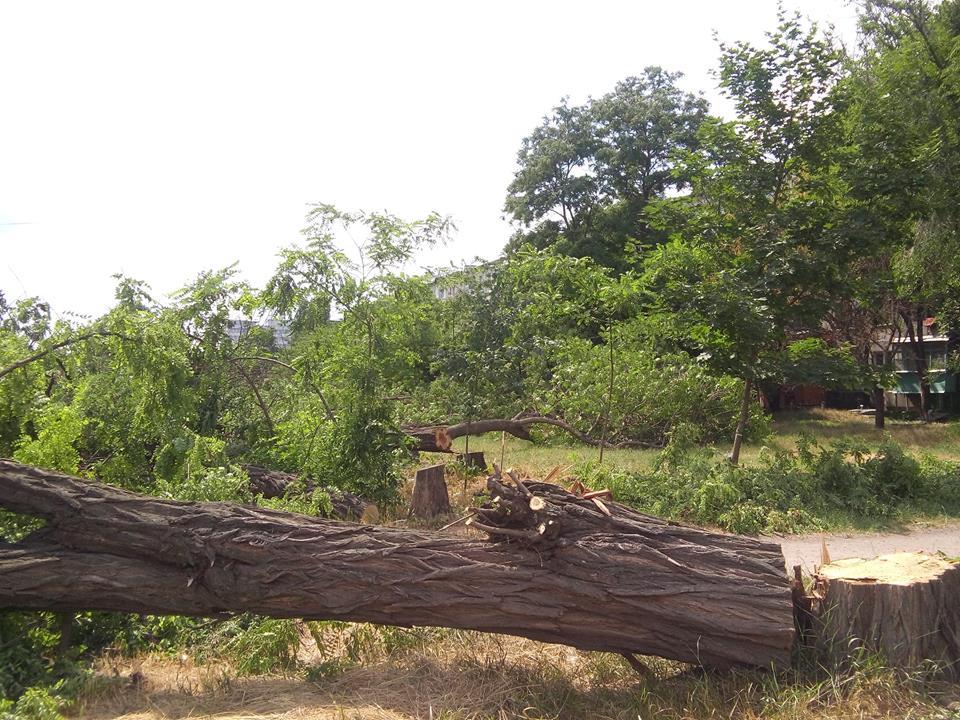 """У Кропивницькому приватне підприємство """"під шумок"""" спиляло значно більше дерев, ніж було дозволено. ФОТО - 3 - Події - Без Купюр"""