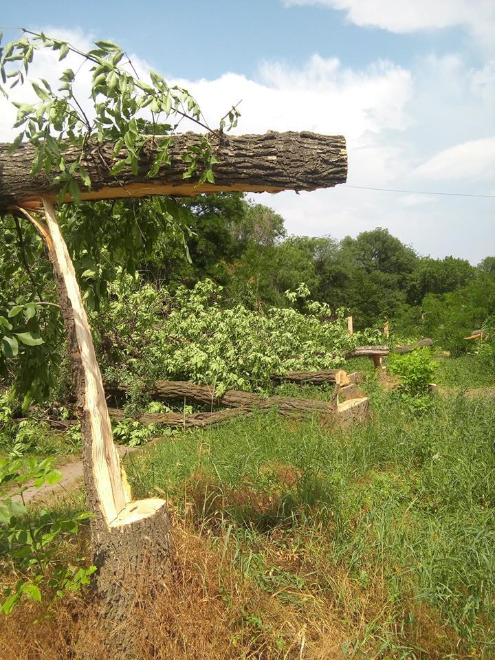 """У Кропивницькому приватне підприємство """"під шумок"""" спиляло значно більше дерев, ніж було дозволено. ФОТО - 4 - Події - Без Купюр"""