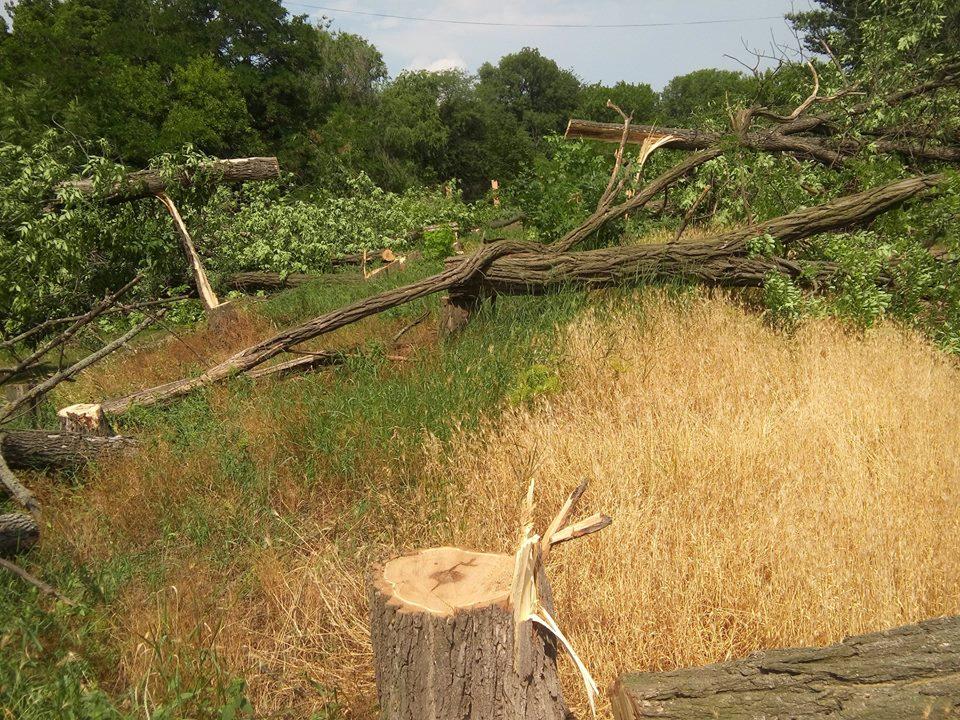 """У Кропивницькому приватне підприємство """"під шумок"""" спиляло значно більше дерев, ніж було дозволено. ФОТО - 5 - Події - Без Купюр"""
