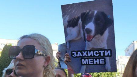 Після масового отруєння собак громадськість нагадала владі, що проблему треба вирішити