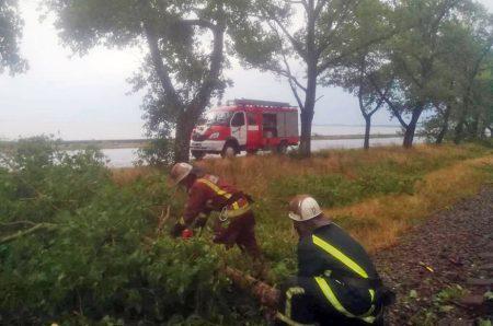 У Світловодську на залізничну колію впало кілька дерев. ФОТО