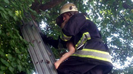 В Олександрії 9-річна дівчинка викликала рятувальників для 3-річного братика. ФОТО
