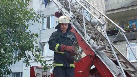 У Кропивницькому рятували кота, який ризикував упасти з 5-ого поверху. ФОТО