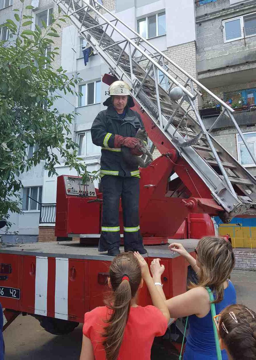 Без Купюр У Кропивницькому рятували кота, який ризикував упасти з 5-ого поверху. ФОТО Життя  рятувальники Кропивницький кіт