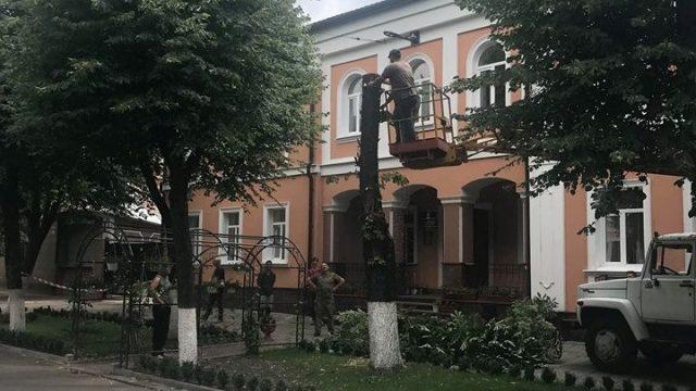 У Кропивницькому біля управління юстиції зносять дерево