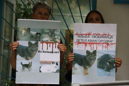 Підозрюваній в отруєнні собак у Кропивницькому призначено психіатричну експертизу