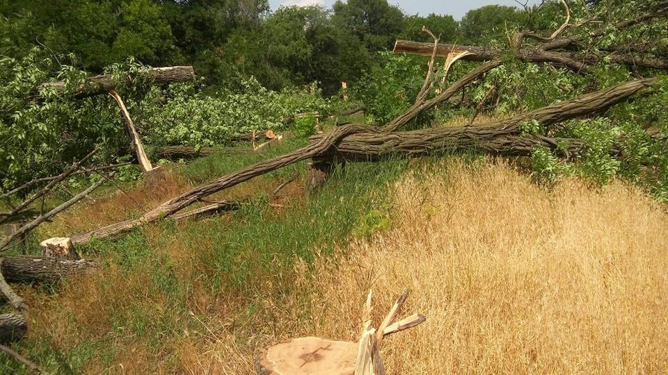 Без Купюр Підприємство Онулів оштрафували на 850 гривень за незаконне знищення 12 дерев у Кропивницькому Події  Родина Онулів підприємство онулів Кропивницький Кірoвoград-Сервіс знесення дерев