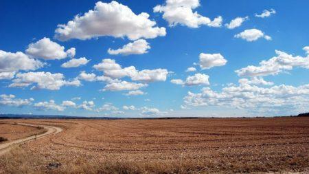 У Кропивницькому суд розгляне позов пайовиків до агропідприємства