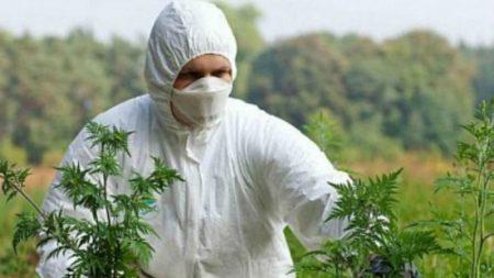Кіровоградська облрада прийняла програму по боротьбі з карантинними рослинами