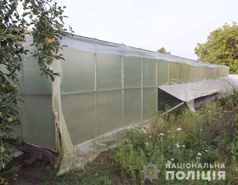 Без Купюр | Життя | У Кропивницькому поліцейські виявили коноплі на мільйон гривень 1