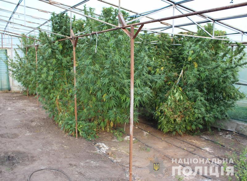 Без Купюр У Кропивницькому поліцейські виявили коноплі на мільйон гривень Життя  поліція Кропивницький конопля