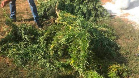 У жителя Кіровоградського району та виявили наркотиків та наркотичної сировини на 200 тисяч гривень. ФОТО