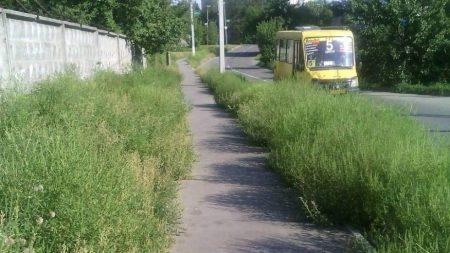Боротьба з амброзією в Кропивницькому: ми її чи вона нас?