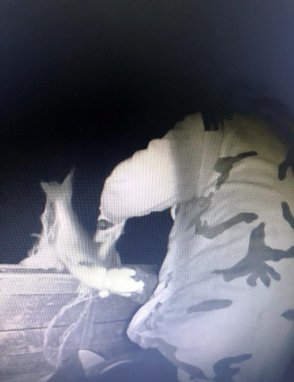 Без Купюр Кіровоградрибохорона склала адмінпротокол на рибалку Кримінал  Петрово Кіровоградрибоохорона водні біоресурси