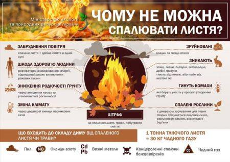 Чому шкідливо спалювати листя
