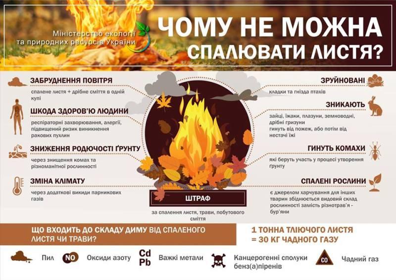 Без Купюр Чому шкідливо спалювати листя Життя  спалювання листя Міністерство екології