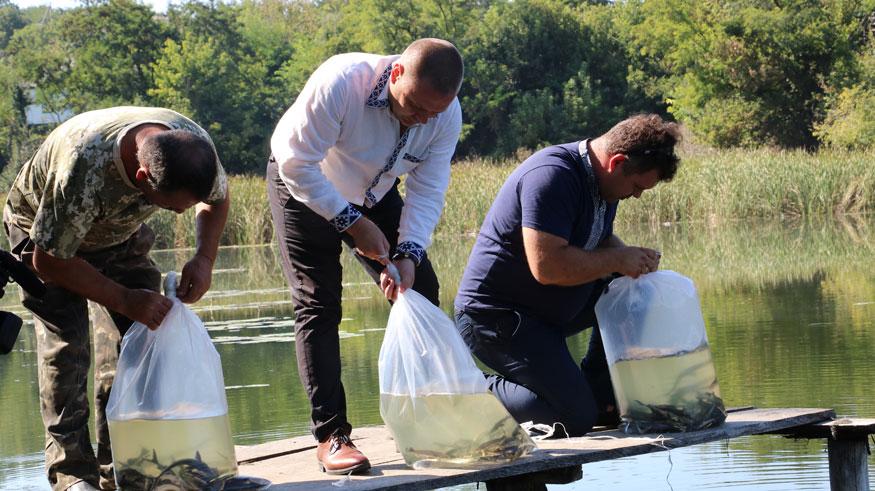 У Новоархангельському районі річку Синюху зарибили осетровими. ФОТО. ВІДЕО - 2 - Вiдео - Без Купюр