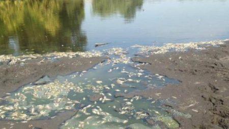 В одному зі ставків Компаніївського району теж загинула риба. ФОТО