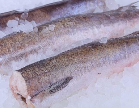 «Гімназія Короткова» зливає понад чверть мільйона на закупівлю риби улюбленцю кропивницьких освітян