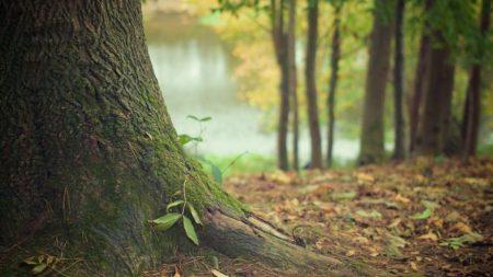 Депутати «земельної» комісії перед розробкою проекту встановлення меж Лісопарку хочуть попереднє погодження