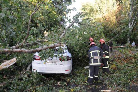 Знеструмлені лінії, повалені дерева та білборди – наслідки вчорашньої негоди на Кіровоградщині. ФОТО