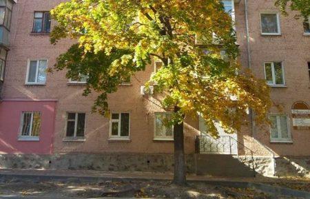 У Кропивницькому мешканці й депутати обурюються можливим знесенням клену по вулиці Михайлівській