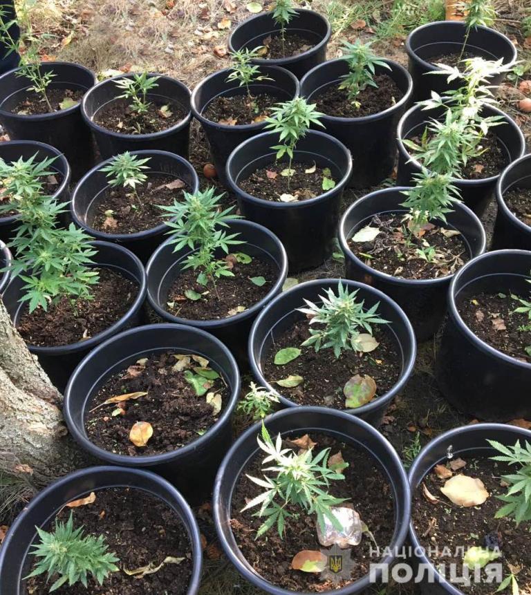 Без Купюр У Кропивницькому чоловік вирощував коноплі у горщиках. ФОТО Кримінал  наркотики Кропивницький конопля гідропоніка