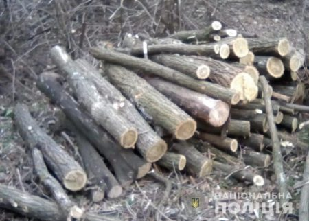 На Кіровоградщині поліцейські зупинили незаконну вирубку дерев