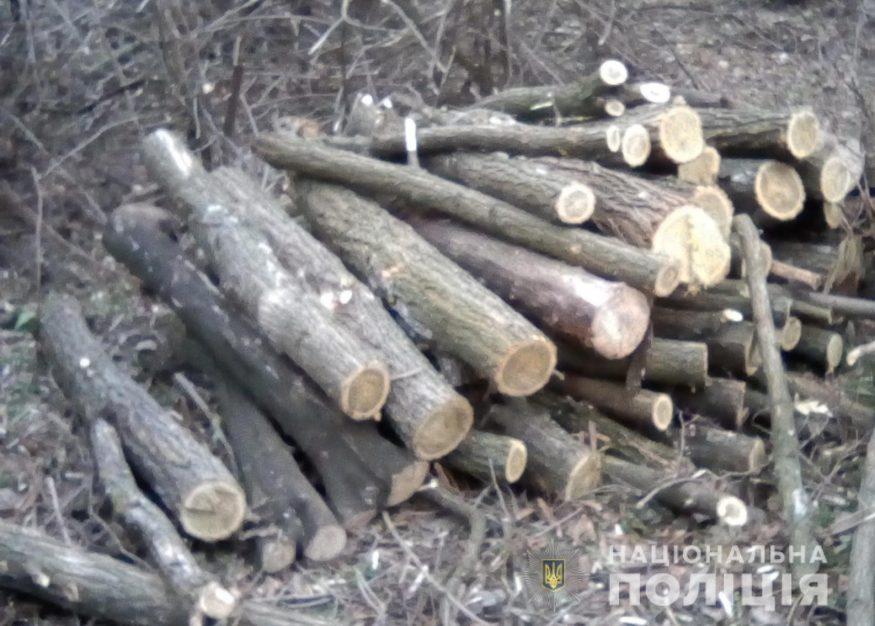 Без Купюр На Кіровоградщині поліцейські зупинили незаконну вирубку дерев Події  поліція Кіровоградщина зрубані дерева