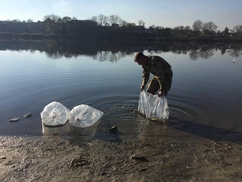 Річку Інгул у Кропивницькому зарибили червонокнижною стерляддю. ФОТО