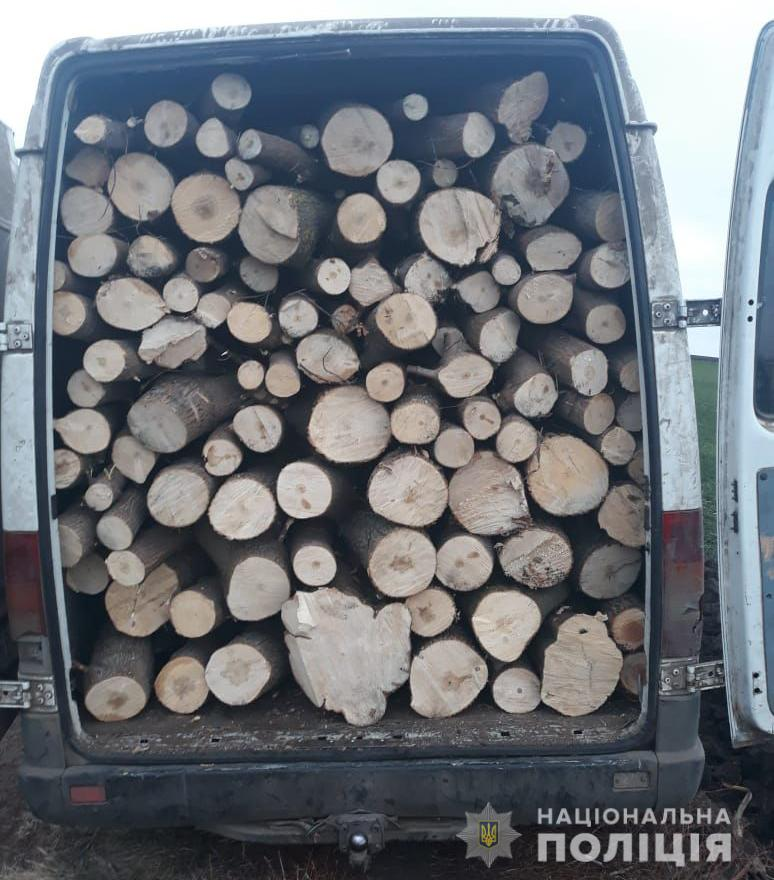 Без Купюр Кропивницький - Події - На Кіровоградщині поліцейські зупинили незаконну вирубку дерев Фотографія 2