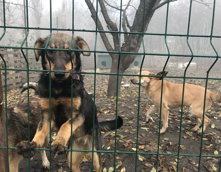 У Кропивницькому вакцинували від сказу безпритульних собак і котів