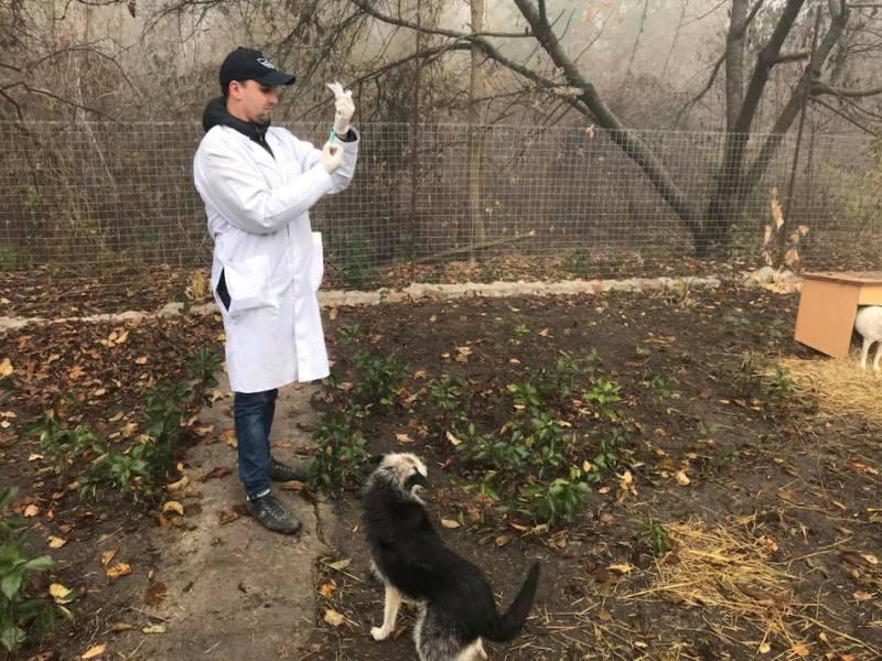 Без Купюр У Кропивницькому вакцинували від сказу безпритульних собак і котів Життя  щасливий пес сказ вакцинація