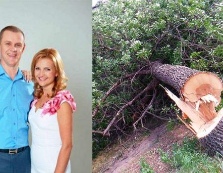 Бізнес проти дерев: де у Кропивницькому очікувати черговий «зелений геноцид»