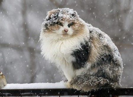 Кіровоградщина: синоптики повідомляють про ускладнення погодних умов