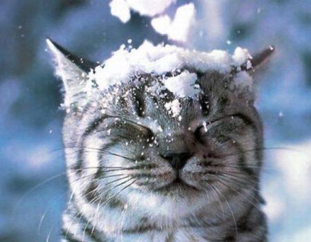 Репетиція зими – у Кропивницькому та області очікується мокрий сніг з дощем