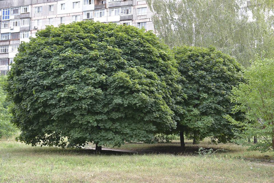Як перейменовувати сквер біля обласної лікарні можна визначити шляхом громадського опитування - 1 - Життя - Без Купюр