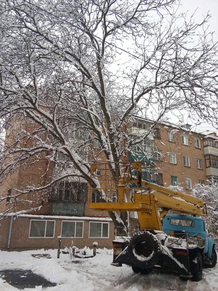 Райкович відреагував на критику зимової обрізки дерев: нарікає на комунальників та активістів - 2 - Життя - Без Купюр