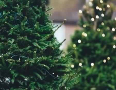 У Кропивницькому 19 грудня стартує новорічний ялинковий ярмарок