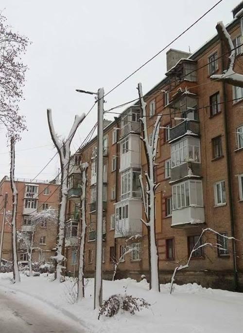 Райкович відреагував на критику зимової обрізки дерев: нарікає на комунальників та активістів - 3 - Життя - Без Купюр