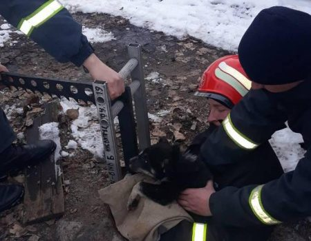 У Кропивницькому рятувальники витягли цуценя, яке впало в люк