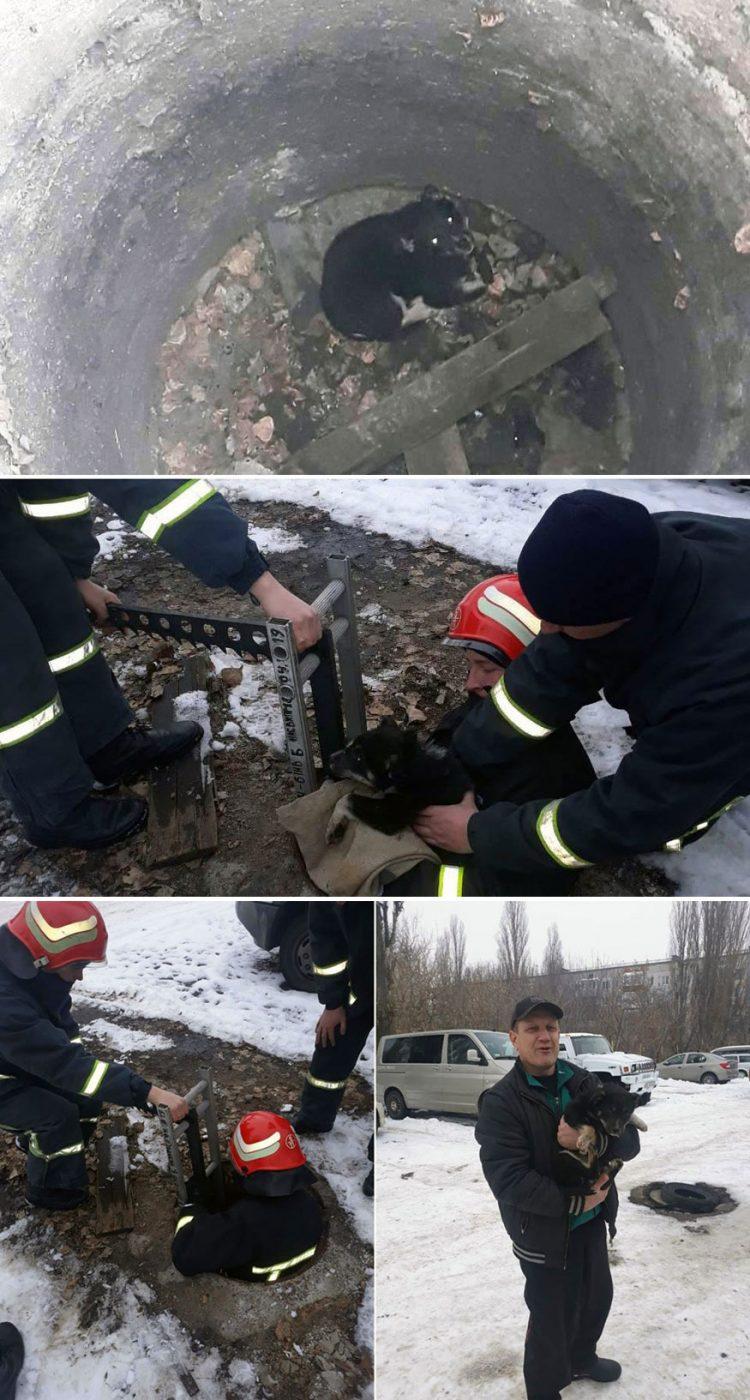 Без Купюр У Кропивницькому рятувальники витягли цуценя, яке впало в люк Життя  рятувальники Кропивницький